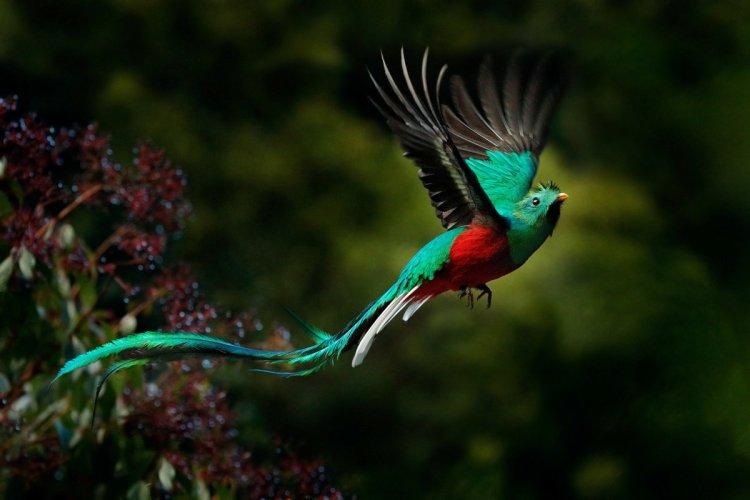 Кетсаль, птицы, священная птица