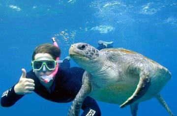 фишки дня, день черепах
