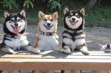 фишки дня, день собак