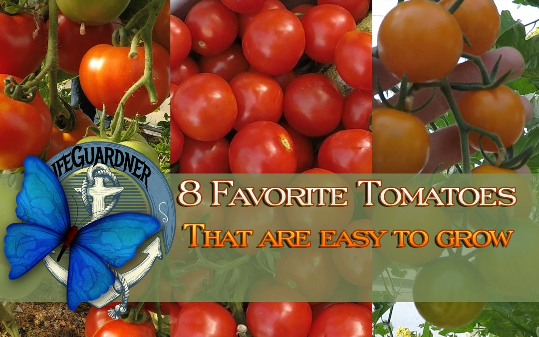 8 Favorite Tomatoes that are EASY to Grow