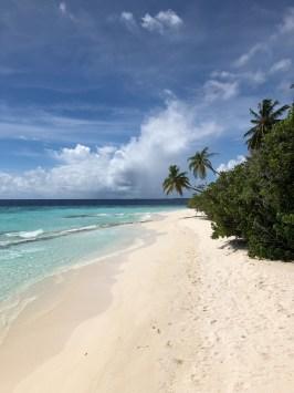 pogoda na Malediwach, palmy na plaży, turkusowa woda, biały piasek