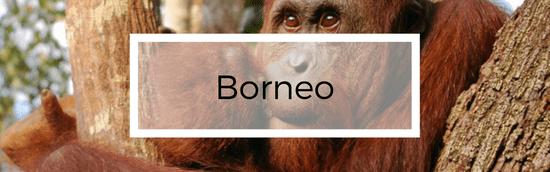 Borneo, Kalimantan - Indonezijos salos