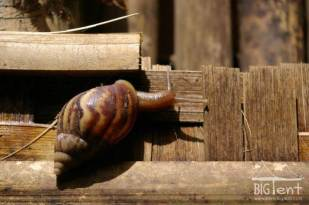Snail in the yard