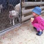 Ponnyridning och feta grisar ;)