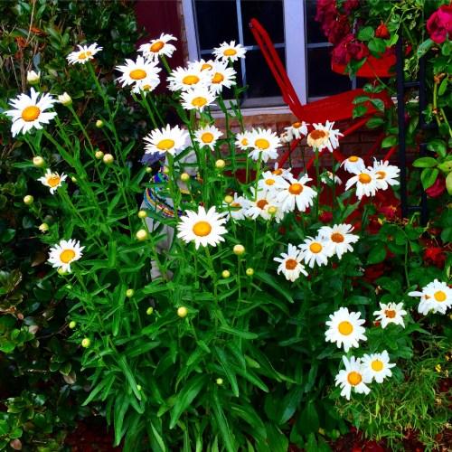 garden 1