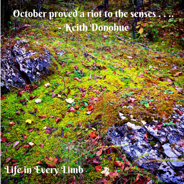 October proved a riot to the senses . . ..- Keith Donohue