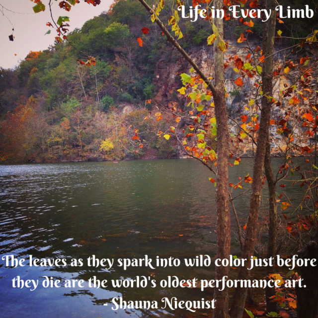 The leaves as they spark into wild color just before they die are the world's oldest performance art.- Shauna Niequist