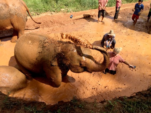 Getting Dirty, The Karen Elephant Experience at Elephant Nature Park, Chiang Mai