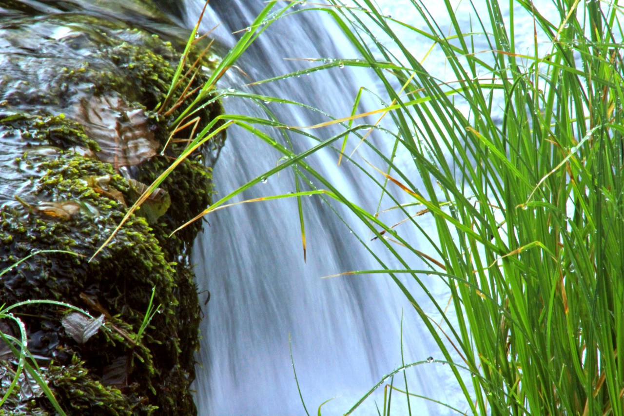 Water and grass 2