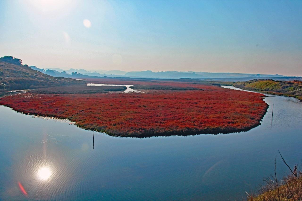 Pescadero Marsh 3
