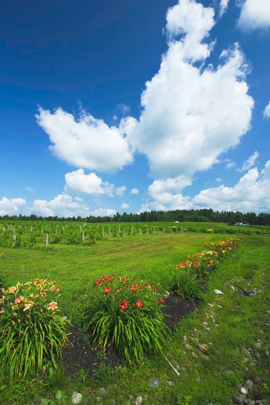 Le Cap de Argent fields