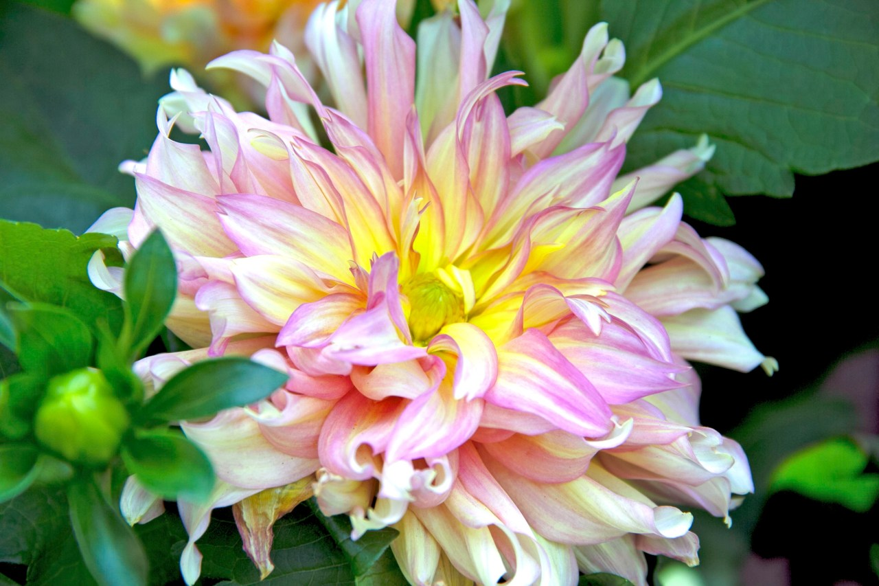 Yellow flower Passion Garden