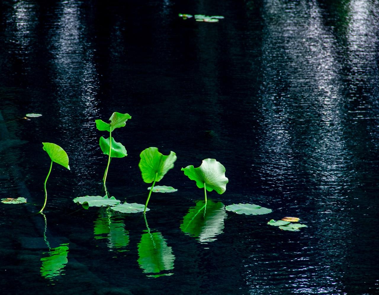 Pond Mont. Bot Garden
