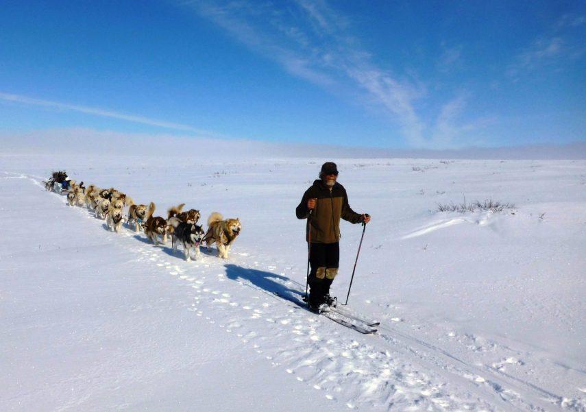Joe Henderson skis ahead of 22 Alaskan Malamutes during Arctic expedition