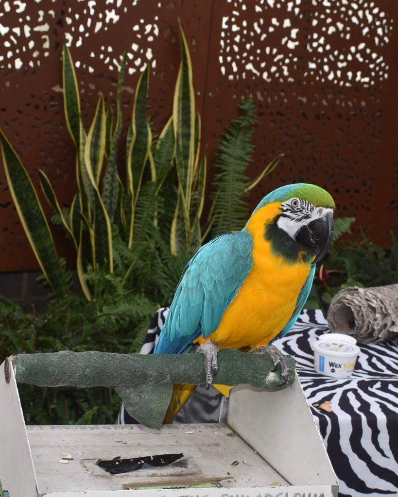 Philadelphia Zoo Birds and animals