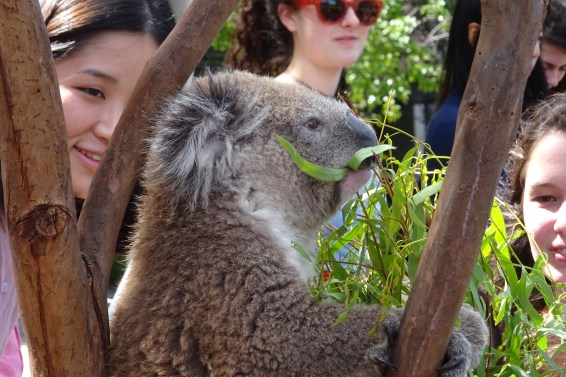 This is a Koala...obviously