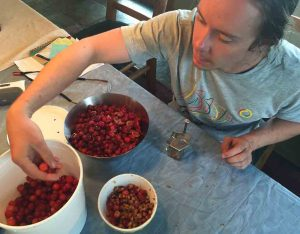 Ben pitting cherries