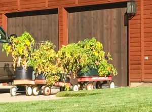 tomato-wagon