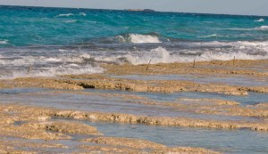 research stakes on stromatolites