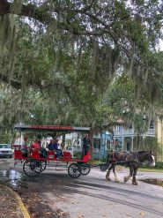 carriage tours of Beaufort SC