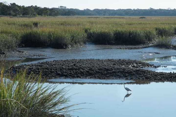 Cumberland-marshland