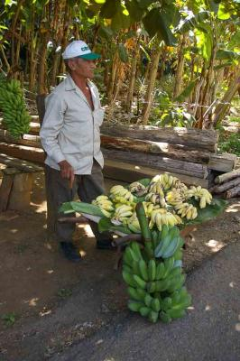 Plantains-for-sale