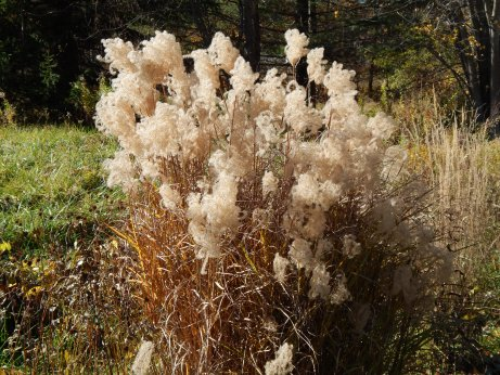 Image1 fluffy plant