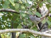 blurrycatbird