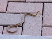 snake steps