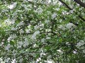 blooming bush yard