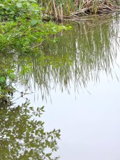 reflections Gilimmerglass Lagoon