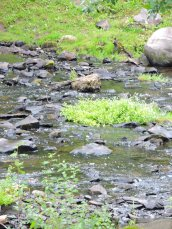 Rice Creek Fallbrook Oswego State