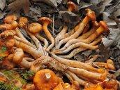 fungus Recreation Park