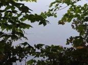 leaf reflections Oswego River Great Bear