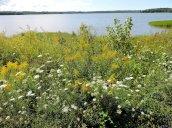 wildflowers Lake Neatahwanta