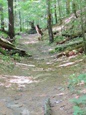 woods Great Bear3