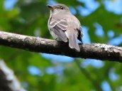bird Granby