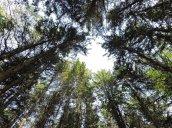 not dead zone trees Great Bear