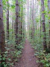 trees Great Bear