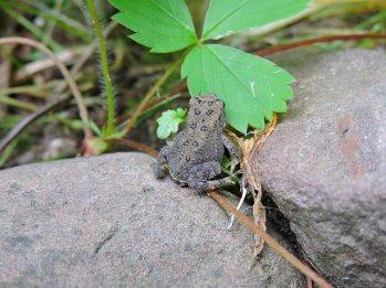 tiny toad garden