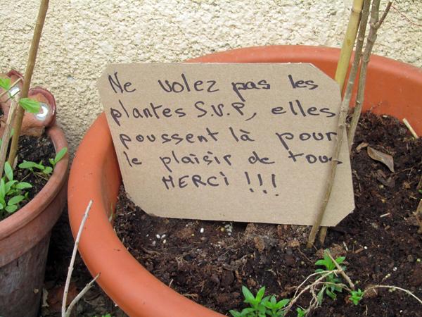 Ne volez pas les plantes