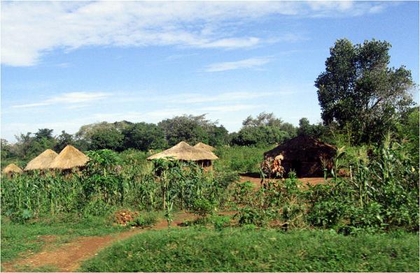 Village in Uganda