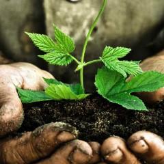 Grow.-Plant.-Discipleship-240x240