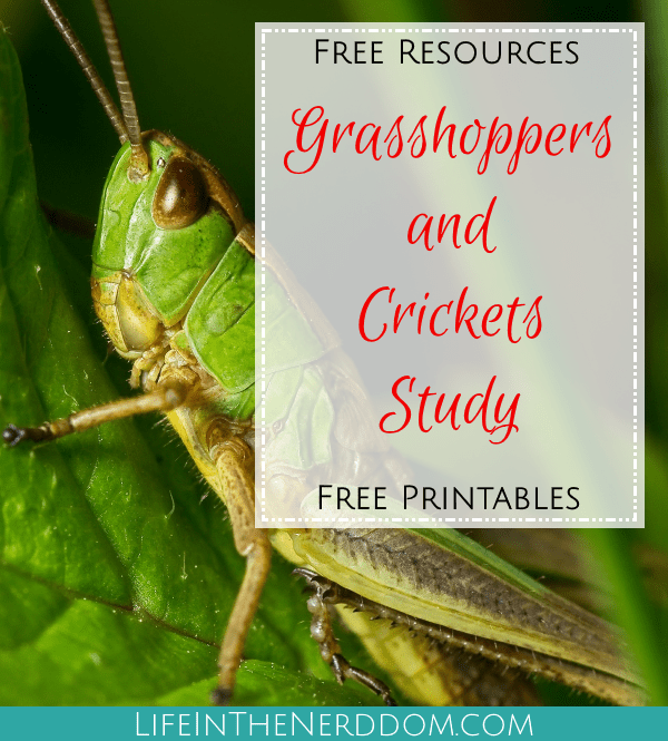 Grasshoppers and Crickets Study at LifeInTheNerddom.com