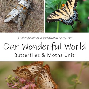 Our Wonderful World: Butterflies and Moths Unit Nature Study at LifeInTheNerddom.com