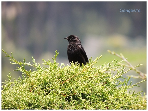 Green Therapy in Coonoor Bird