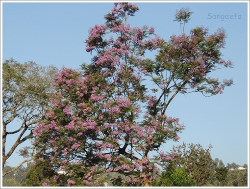 Green Therapy in Coonoor Flower