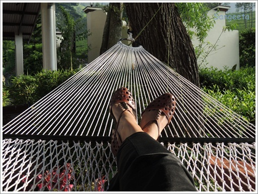 Green Therapy in Coonoor Hammock