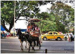 Kolkata Horse Buggy