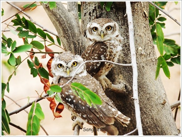Indore Sightseeing Gomatgiri Owl